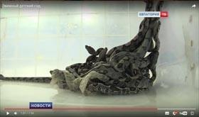 Змеиный детский сад